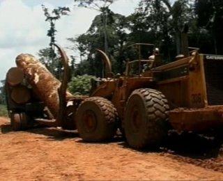 Un paso más contra la tala ilegal.