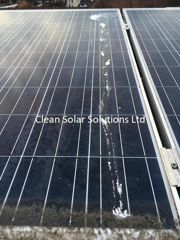 Bird droppings on solar panels Canterbury