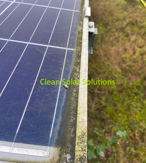 Ground & Roof Mounted Solar Panel Cleaning At Worksop