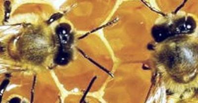 Insektensterben: Was tun?