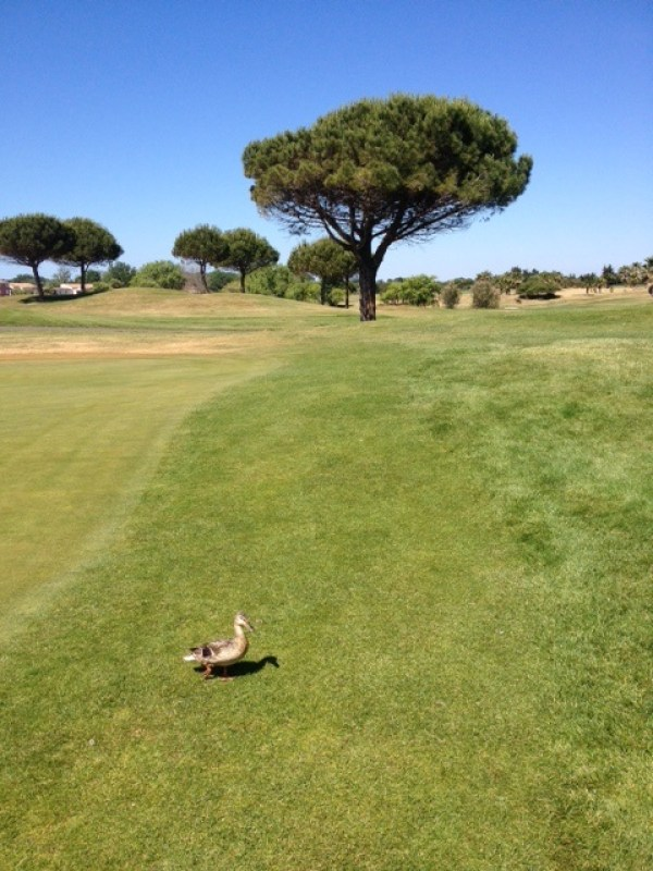 Le Cap d'Adge Golf International