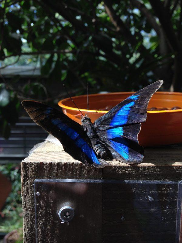 Serre aux papillons Terra Botanica