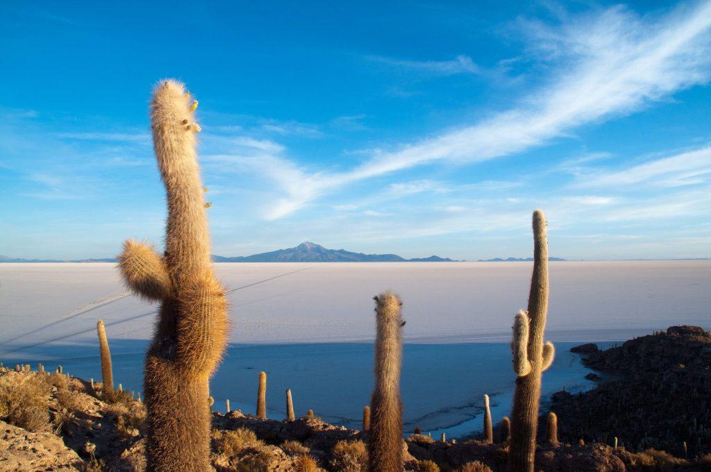 île Incahuasi Uyuni