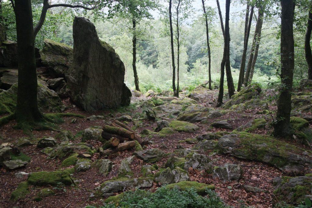Forêt légendaire des Ardennes