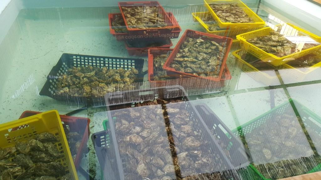 Bassin d'Arcachon manger des huîtres