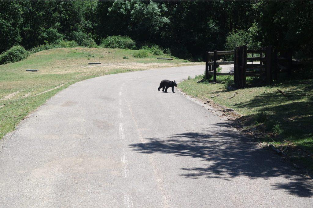 Activités insolites d'Ardèche zoo