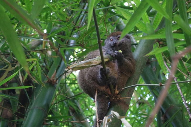 Lemur's Park Madagascar