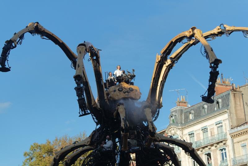 Araignée Ariane Toulouse