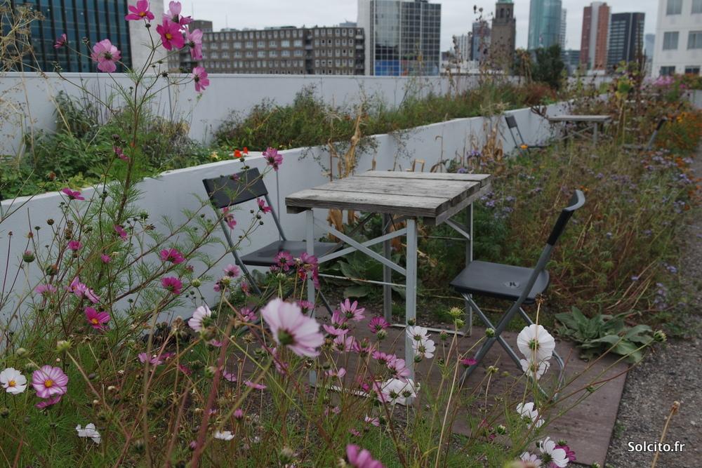 Op Het Dak Rotterdam
