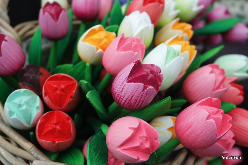 Tulipes Rotterdam