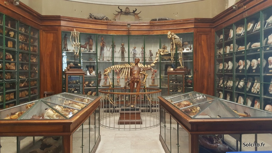 Visiter galerie des horreurs Montpellier