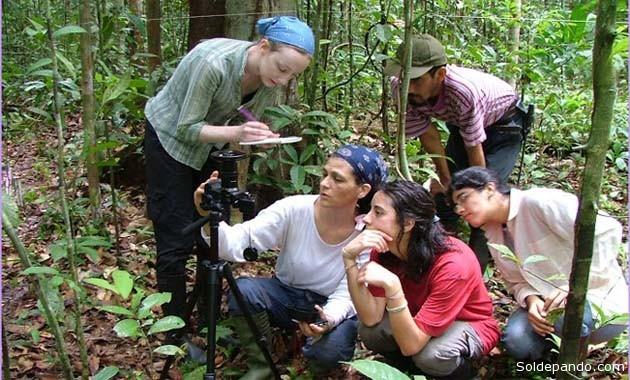 Los investigadores de la Universidad de Leeds, Inglaterra, en una de las parcelas forestales donde estudiaron 30 años en la vida de los bosques amazónicos. | Foto cortesía Rainfor