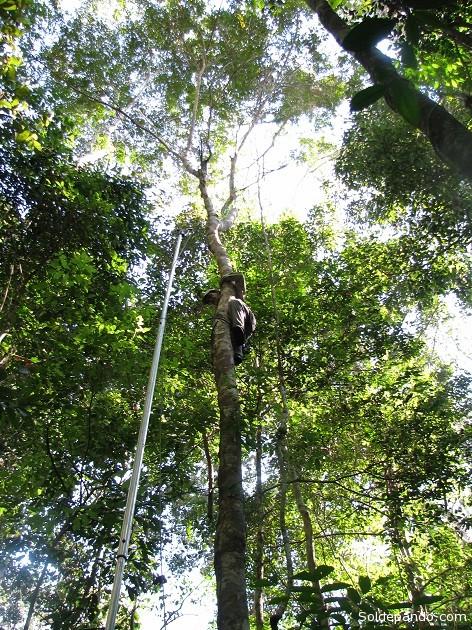 La investigación desarrollada en 35 hectáreas permitió identificar aproximadamente 1.000 especies de árboles.   Foto: V. Vos