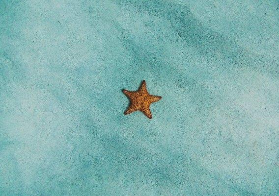 perché non toccare le stelle marine