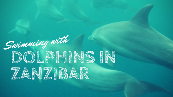 Our experience swimming with dolphins off the coast of Southern Unguja (Zanzibar). What a treat to swim with them in their natural habitat!
