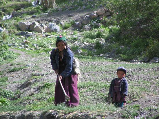 ladakh-feldarbeit