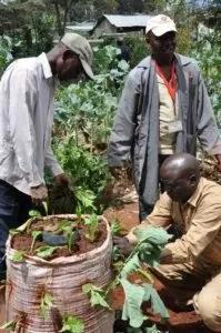 sacs potager kenya