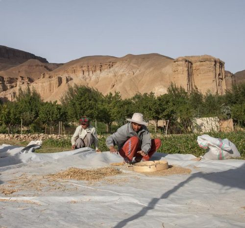 afghanistan-agriculteurs-programme