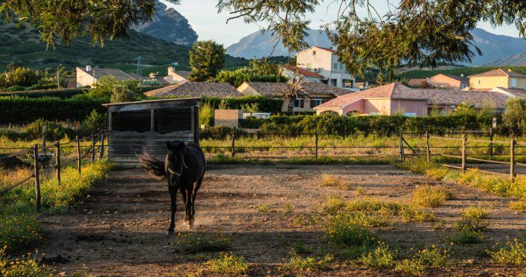 Oletta in Corsica: verblijf op een paardenranch tussen de wijngaarden