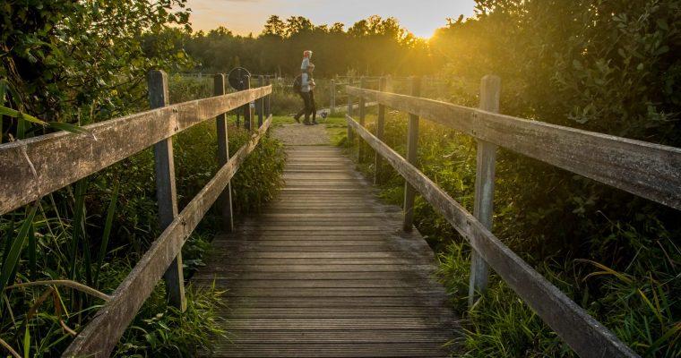 Domein Bovy in Heusden-Zolder: wandelen door het bos en de Wijers