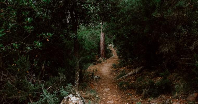 Forêt de Bonifatu: afkoelen in de bossen van Corsica
