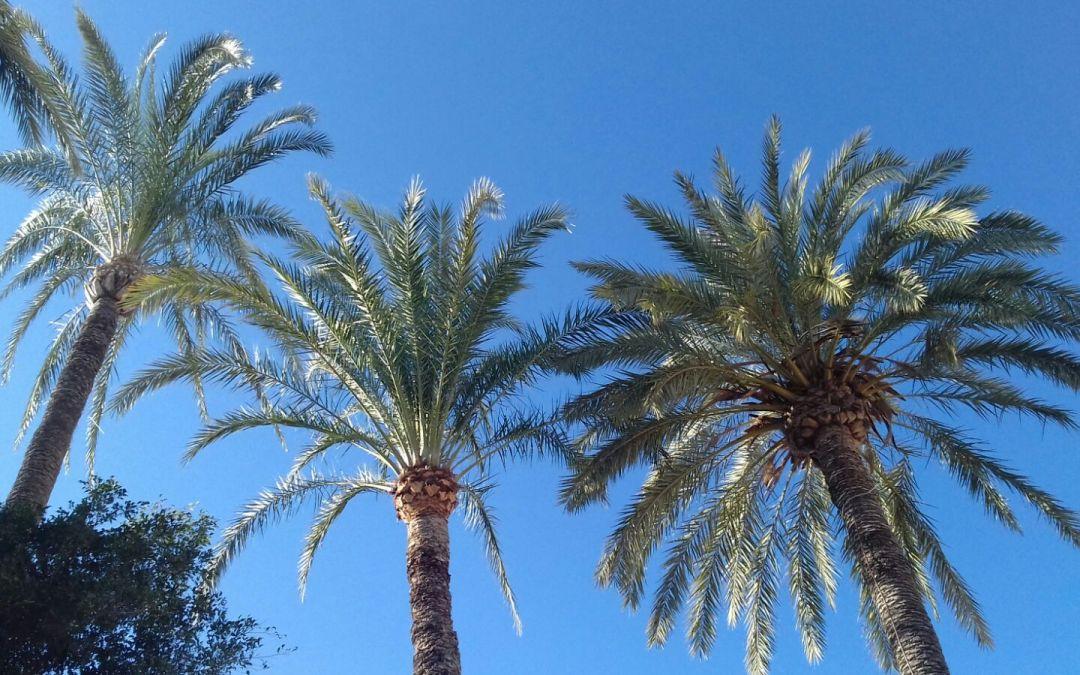 tratamiento de palmeras