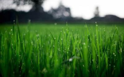 Sol i Vent Paisatges: ¡lánzate al jardín!