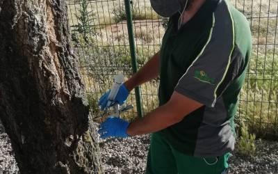 Tratamientos contra la Galeruca del Olmo en Madrid por Solivent Paisatges