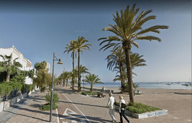 El ayuntamiento de San Javier (Murcia) consigue controlar el picudo rojo en las palmeras