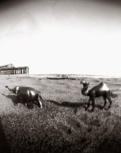 archival digital print from pinhole photograph