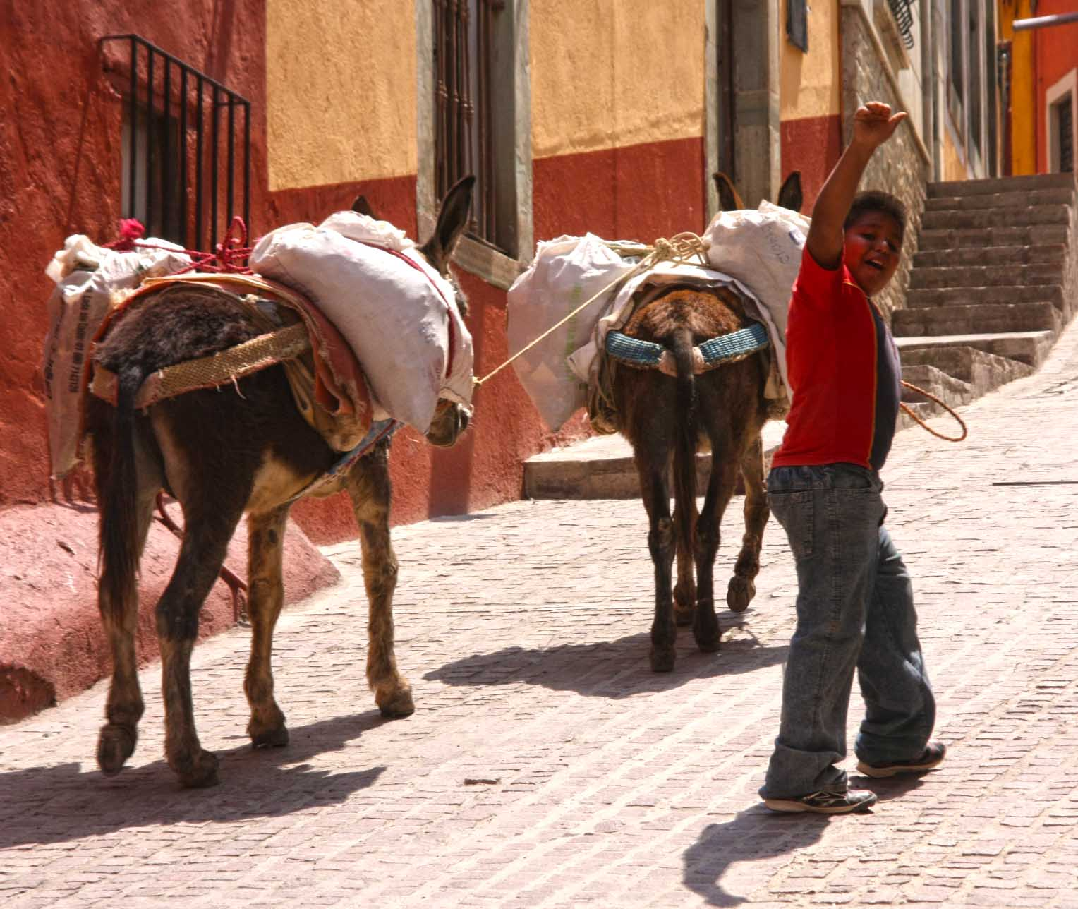 Young boy waves and walks his donkeys along the streets of Guanajuato