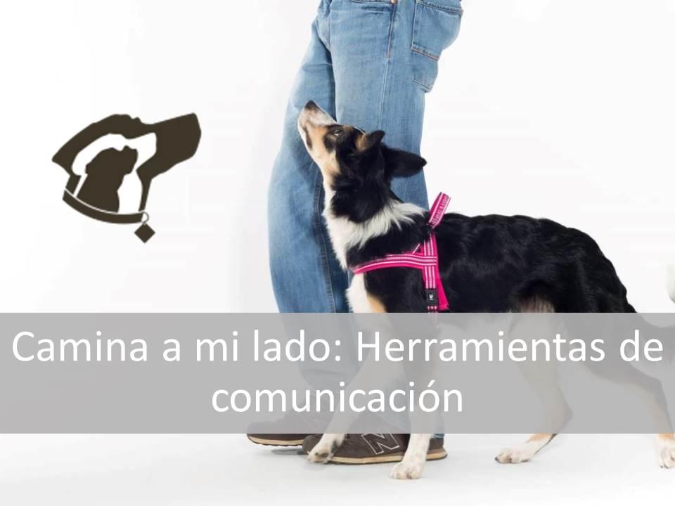 Protegido: Camina a mi lado: Herramientas de comunicación