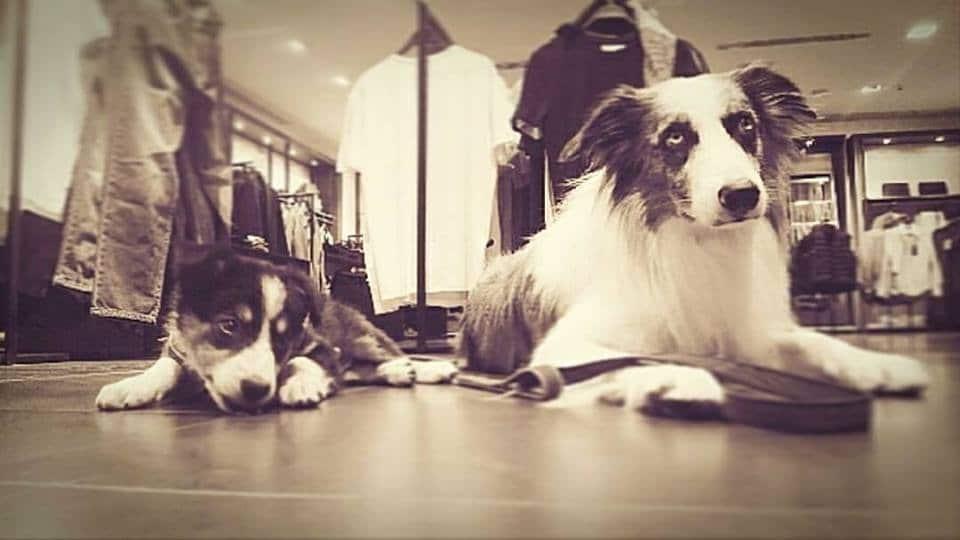 Bares y tiendas, dos actividades con perro que nos encantan