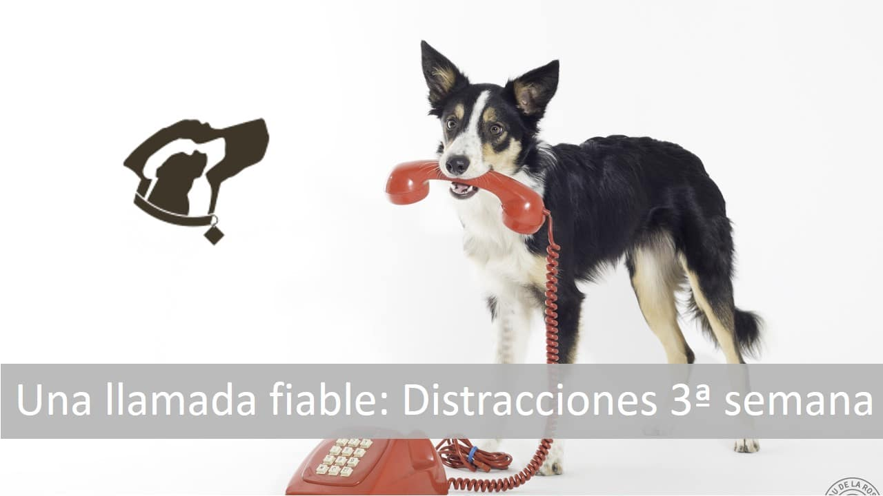 Protegido: Llamada fiable: Distracciones 3ª Semana