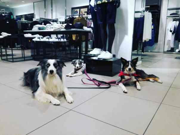 Servicio de Adiestramiento Canino