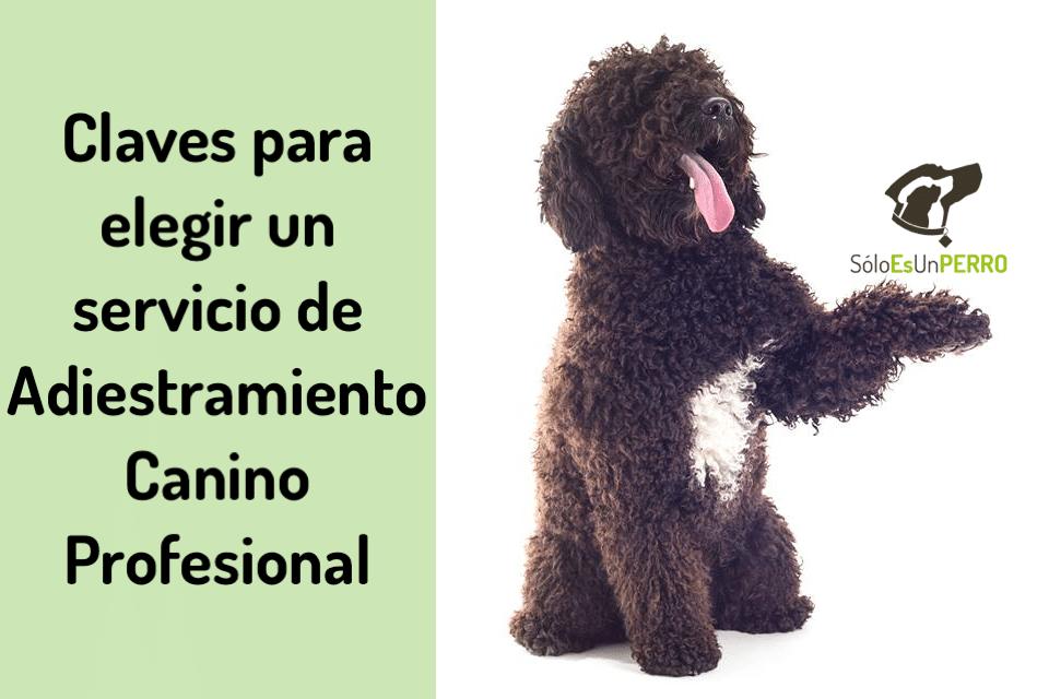 Claves para elegir un servicio de adiestramiento canino