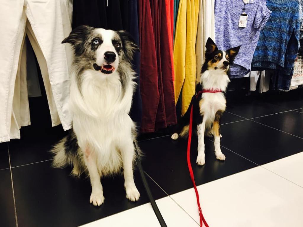 De compras con perro, siempre