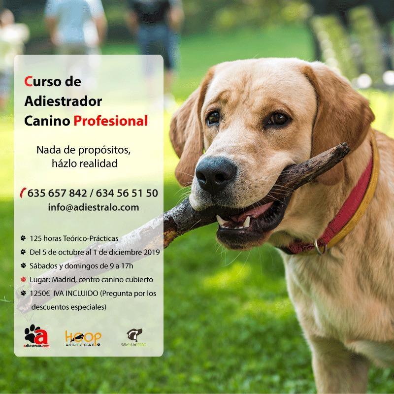 Curso adiestrador canino profesional Madrid