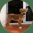 Alumno del Curso de Cachorro