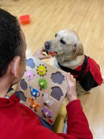 Entrenamiento de perro de intervención