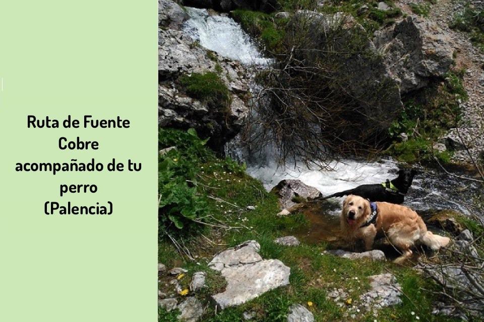 Ruta-perro-Palencia