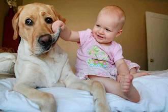 mejores fotos de perros y bebes