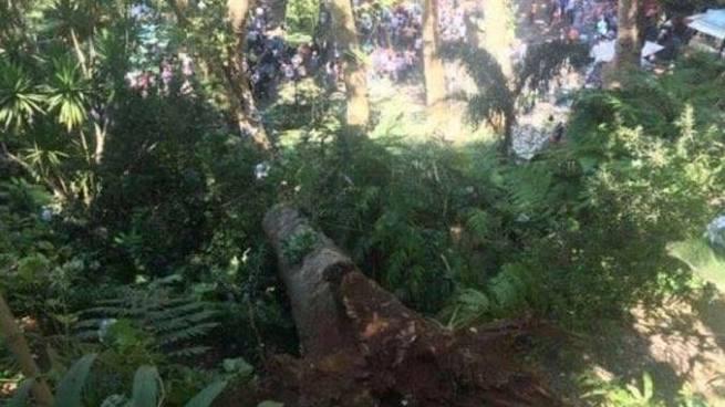 Árbol cae y deja al menos 12 muertos durante un festival religioso en Portugal