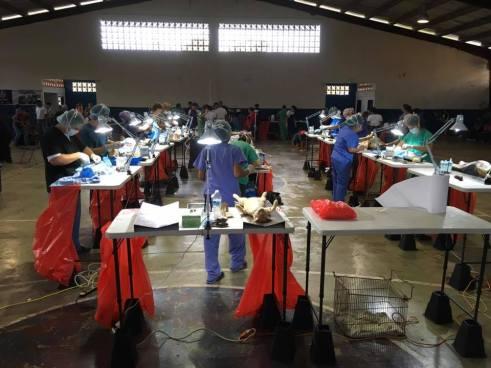 Alcaldía de Panamá busca esterilizar a 25 mil perros y gatos antes del 2019