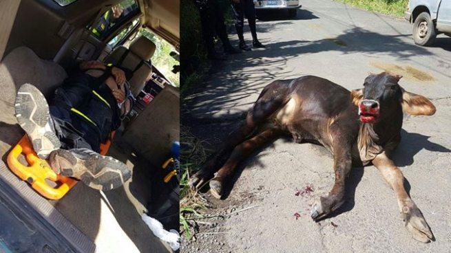 Motociclista resulta herido luego de chocar con una vaca en Ciudad Arce