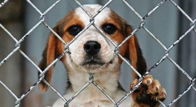 Costa Rica aprueba ley que castiga con cárcel maltrato de animales domésticos