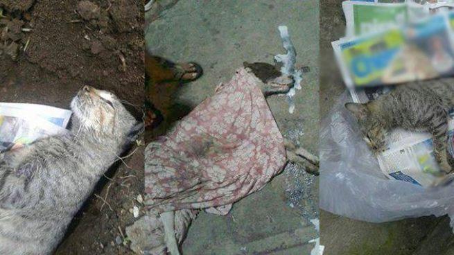 Denuncian envenenamiento de animales en una comunidad de Santa Tecla