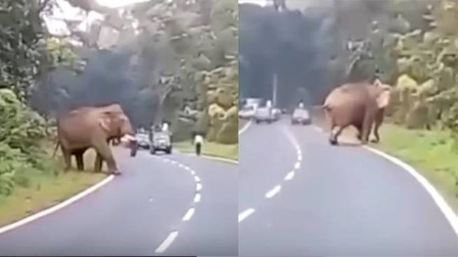 Elefante mata a un hombre que intentó sacarse una 'selfie' con él