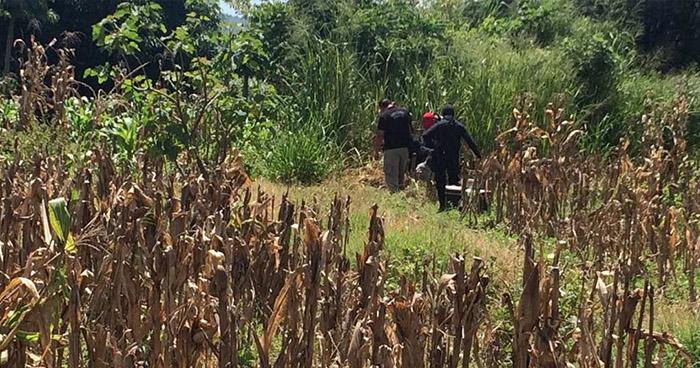 Ubican el cadáver putrefacto de una mujer al interior de unos cultivos en San Vicente