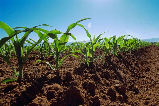 Pronostican un buen año para la agricultura en El Salvador